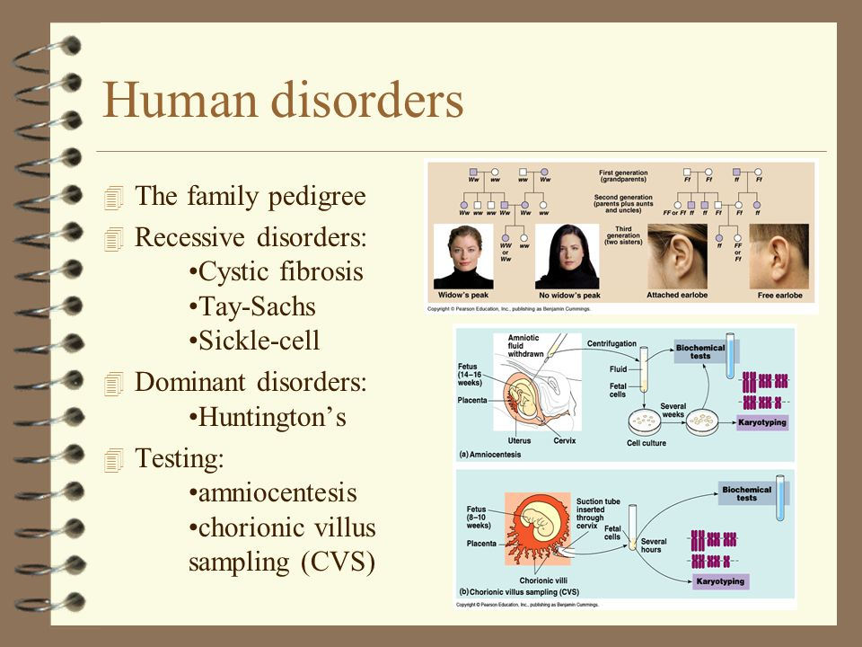 Human disorders 4 The family pedigree 4 Recessive disorders: Cystic fibrosis Tay-Sachs Sickle-cell 4 Dominant disorders: Huntingtons 4 Testing: amnioc