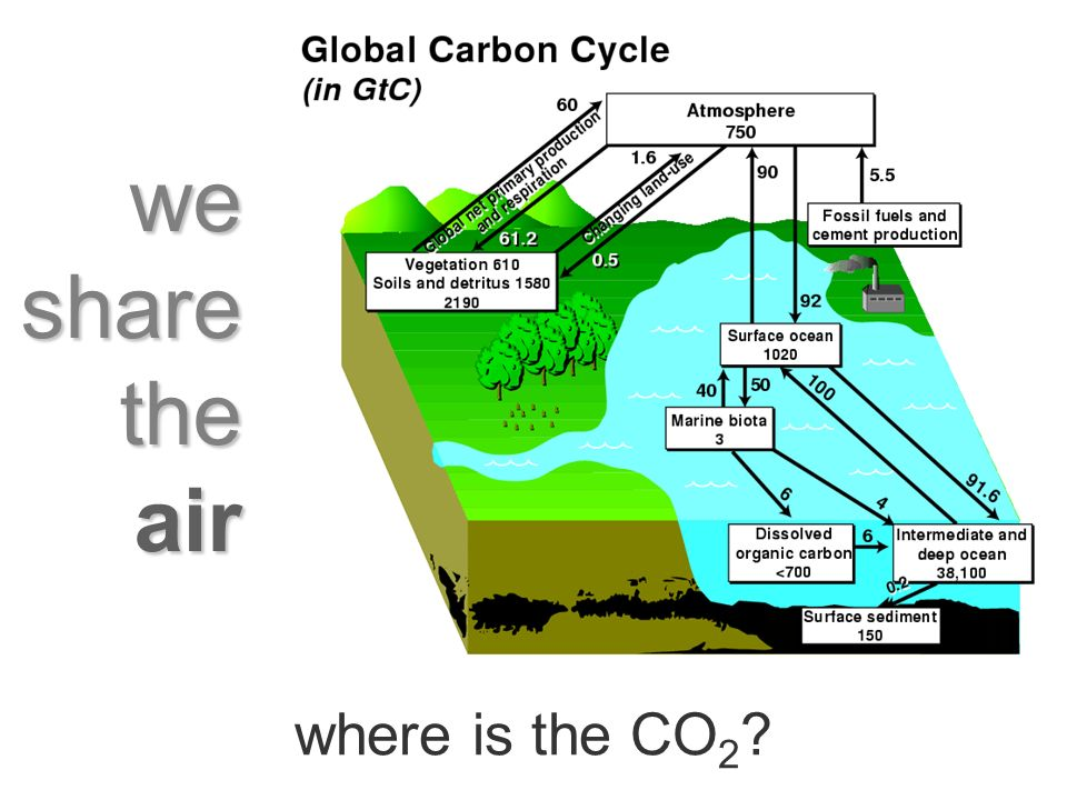 we share the air where is the CO 2
