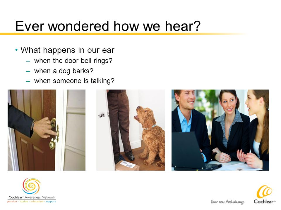 Ever wondered how we hear? What happens in our ear –when the door bell rings? –when a dog barks? –when someone is talking?