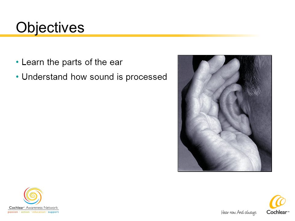 Objectives Learn the parts of the ear Understand how sound is processed