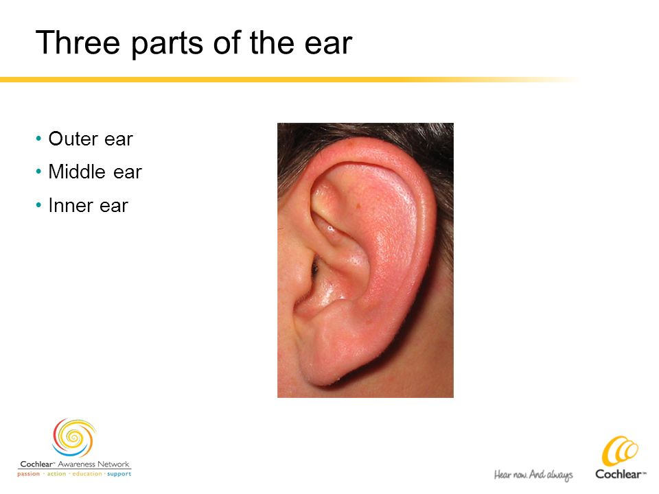 Three parts of the ear Outer ear Middle ear Inner ear