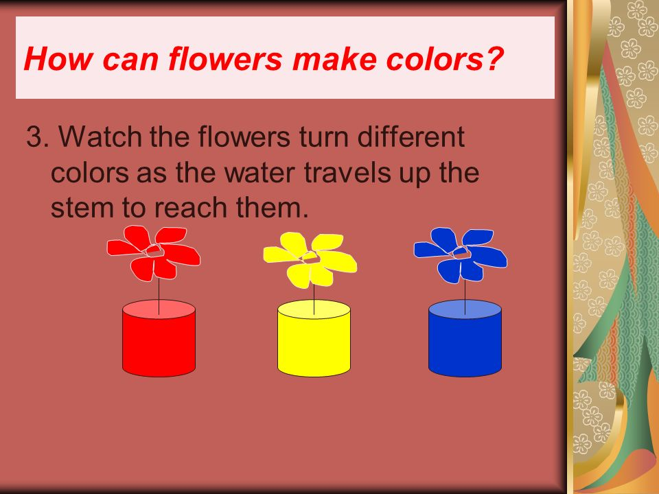 3. Watch the flowers turn different colors as the water travels up the stem to reach them.