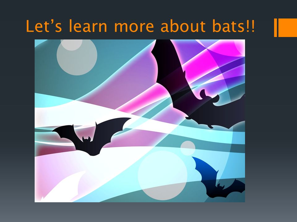 Lets learn more about bats!!
