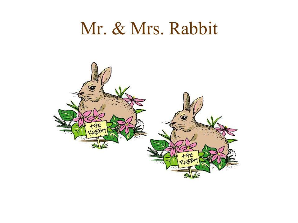 Mr. & Mrs. Rabbit
