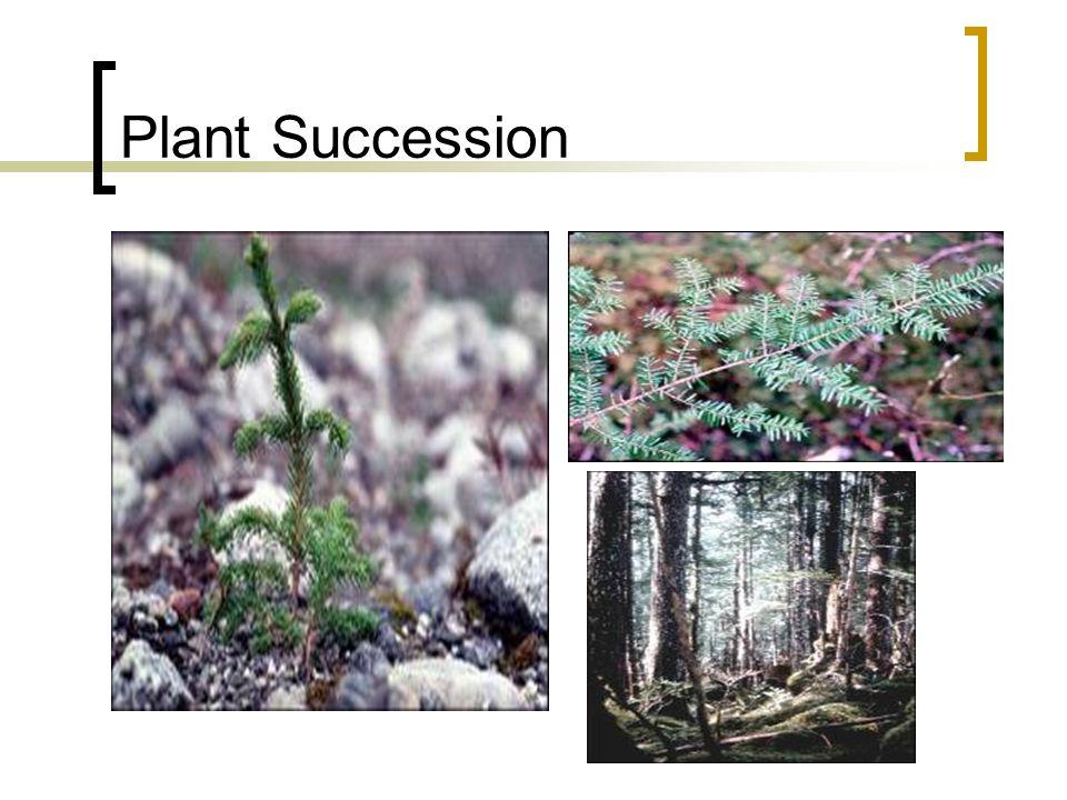 Plant Succession
