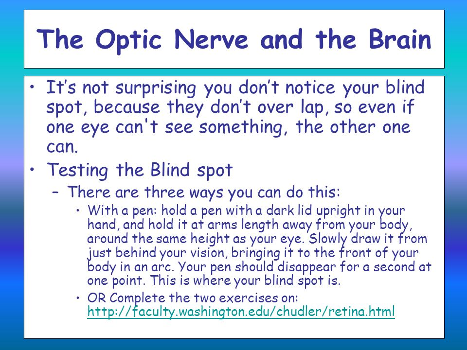 The Optic Nerve and the Brain Its not surprising you dont notice your blind spot, because they dont over lap, so even if one eye can't see something,