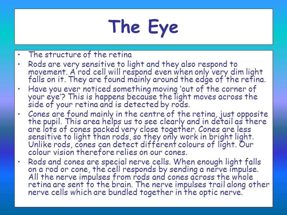 The Eye The structure of the retina Rods are very sensitive to light and they also respond to movement. A rod cell will respond even when only very di