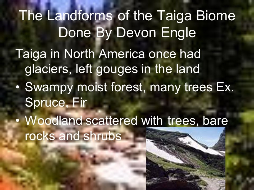The Landforms of the Taiga Biome Done By Devon Engle Taiga in North America once had glaciers, left gouges in the land Swampy moist forest, many trees