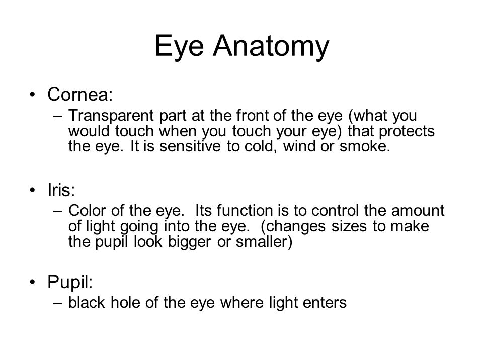 Rods: –work in dim light sees shape and size Cones: –work in bright light to see colors and specifics Optic nerve: –carries impulses from the neurons to the brain Blind spot: –area on the retina where there are no neurons.