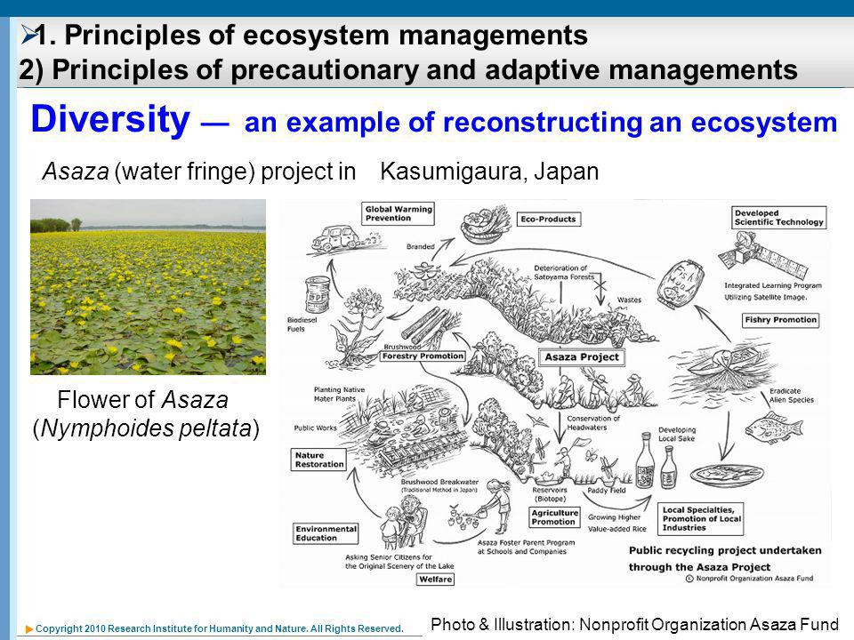Copyright 2010 Research Institute for Humanity and Nature. All Rights Reserved. Diversity an example of reconstructing an ecosystem Asaza (water fring