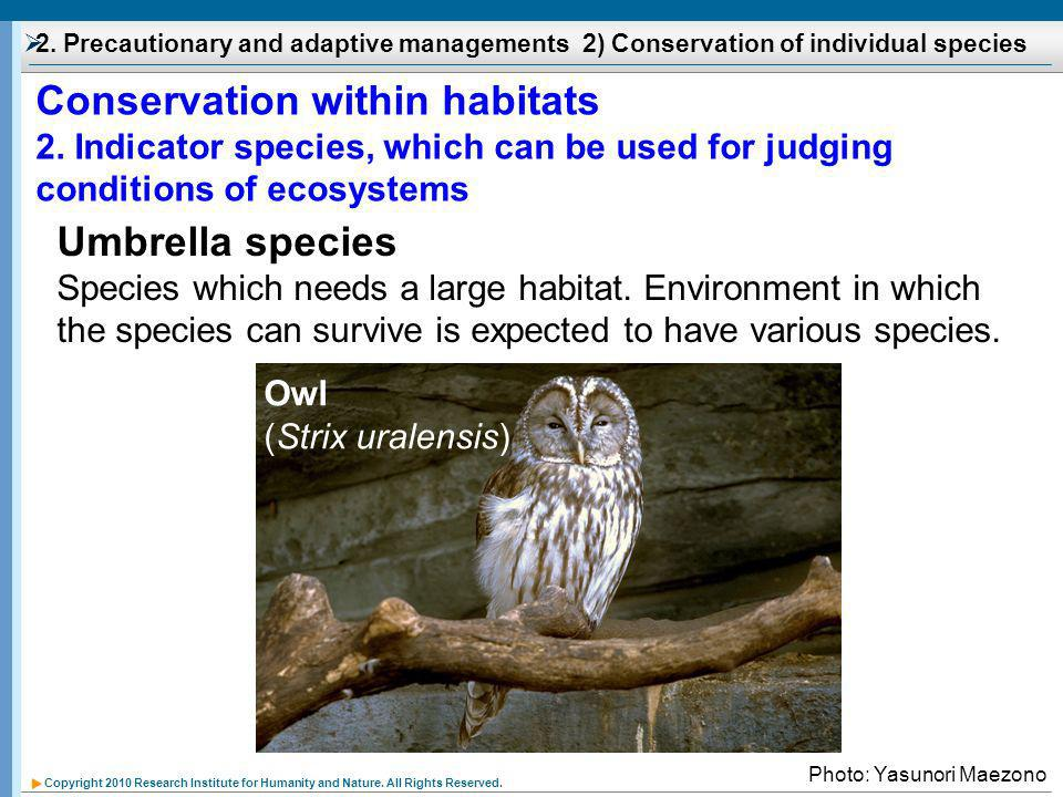 Copyright 2010 Research Institute for Humanity and Nature. All Rights Reserved. Umbrella species Species which needs a large habitat. Environment in w