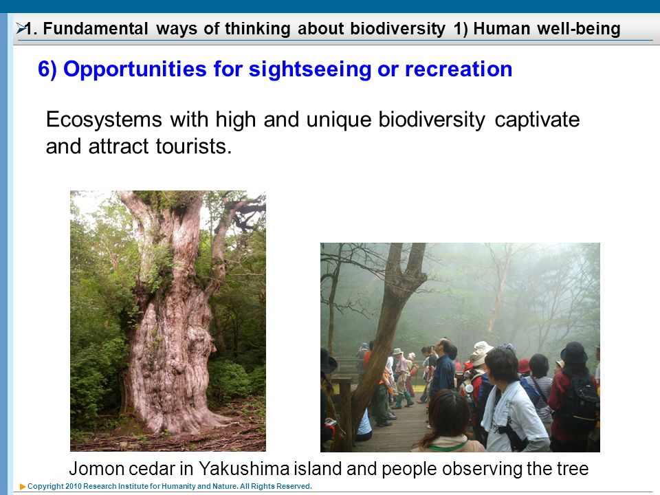 Copyright 2010 Research Institute for Humanity and Nature. All Rights Reserved. 1. Fundamental ways of thinking about biodiversity 1) Human well-being