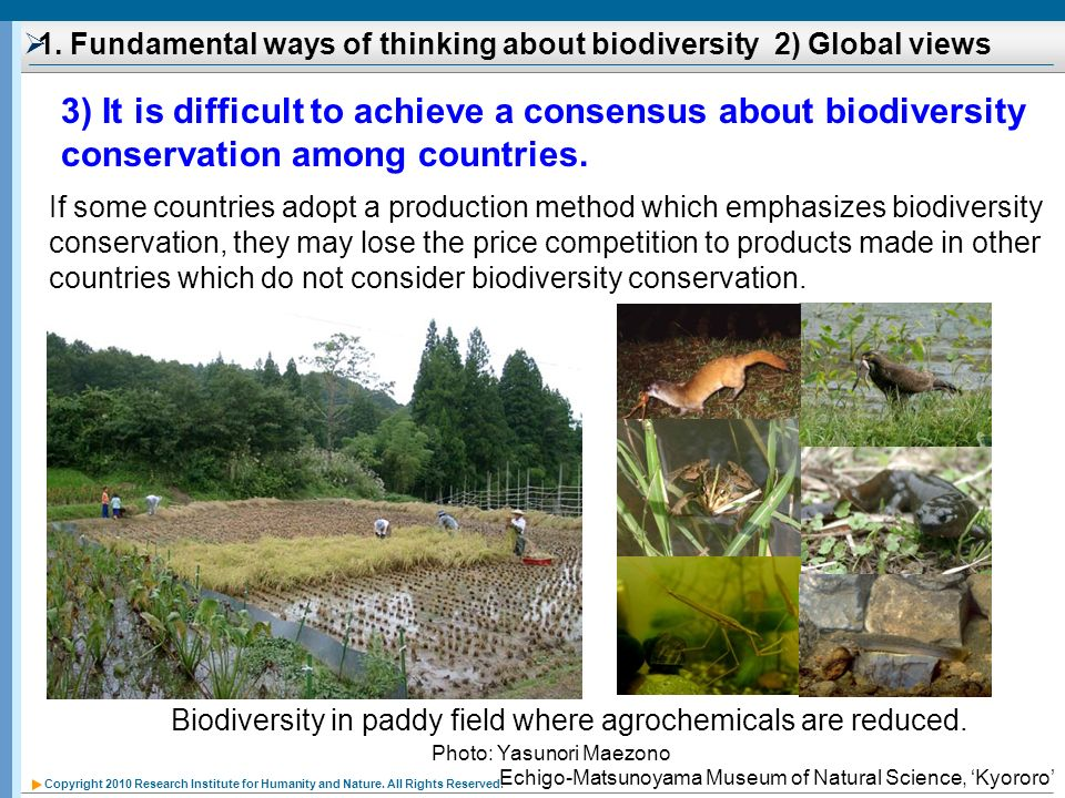 Copyright 2010 Research Institute for Humanity and Nature. All Rights Reserved. 1. Fundamental ways of thinking about biodiversity 2) Global views If