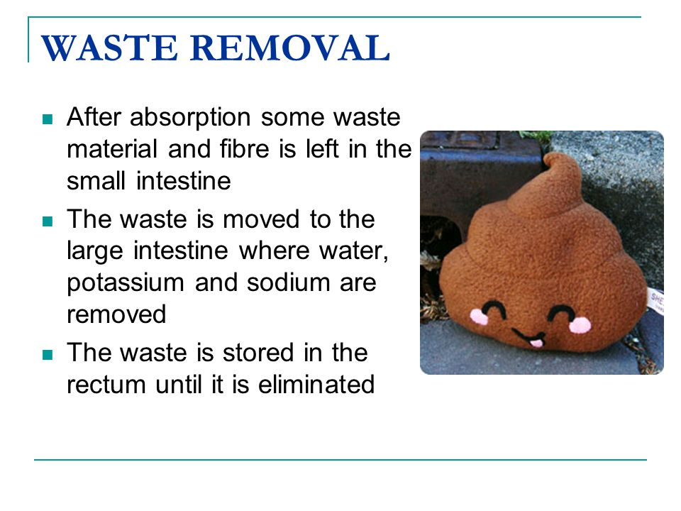 WASTE REMOVAL After absorption some waste material and fibre is left in the small intestine The waste is moved to the large intestine where water, pot