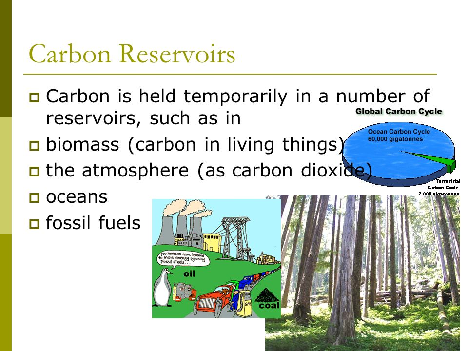 Carbon Reservoirs Carbon is held temporarily in a number of reservoirs, such as in biomass (carbon in living things) the atmosphere (as carbon dioxide