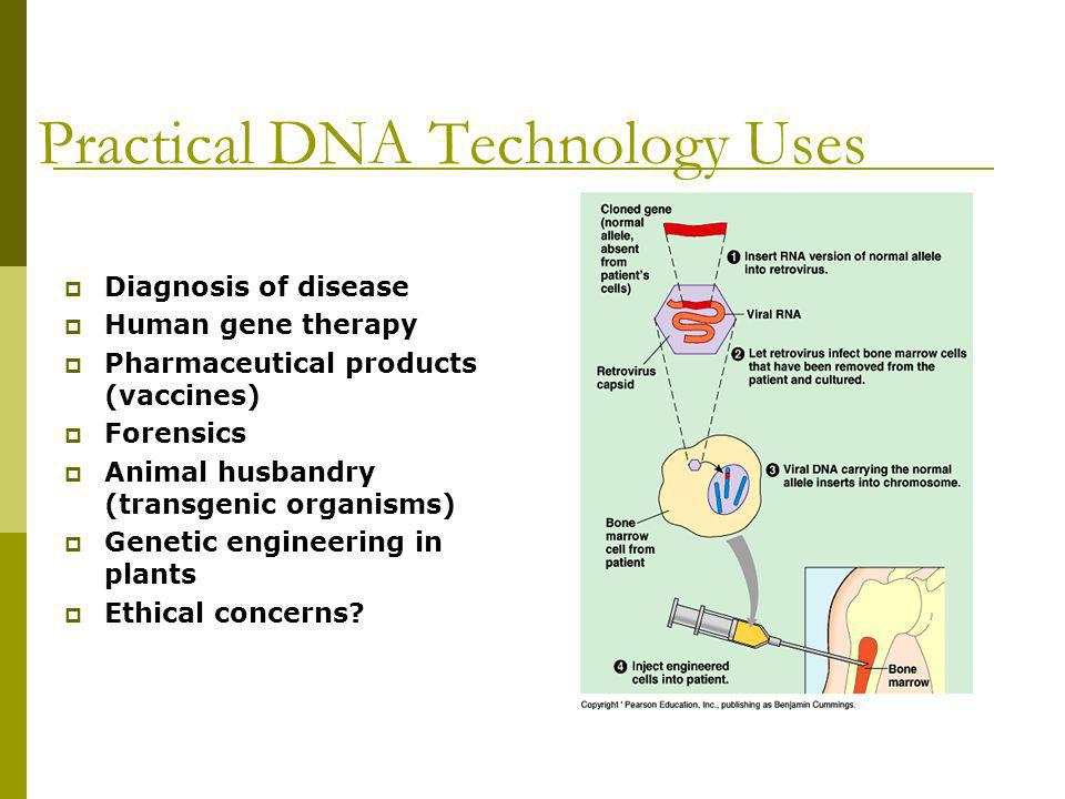 Practical DNA Technology Uses Diagnosis of disease Human gene therapy Pharmaceutical products (vaccines) Forensics Animal husbandry (transgenic organi