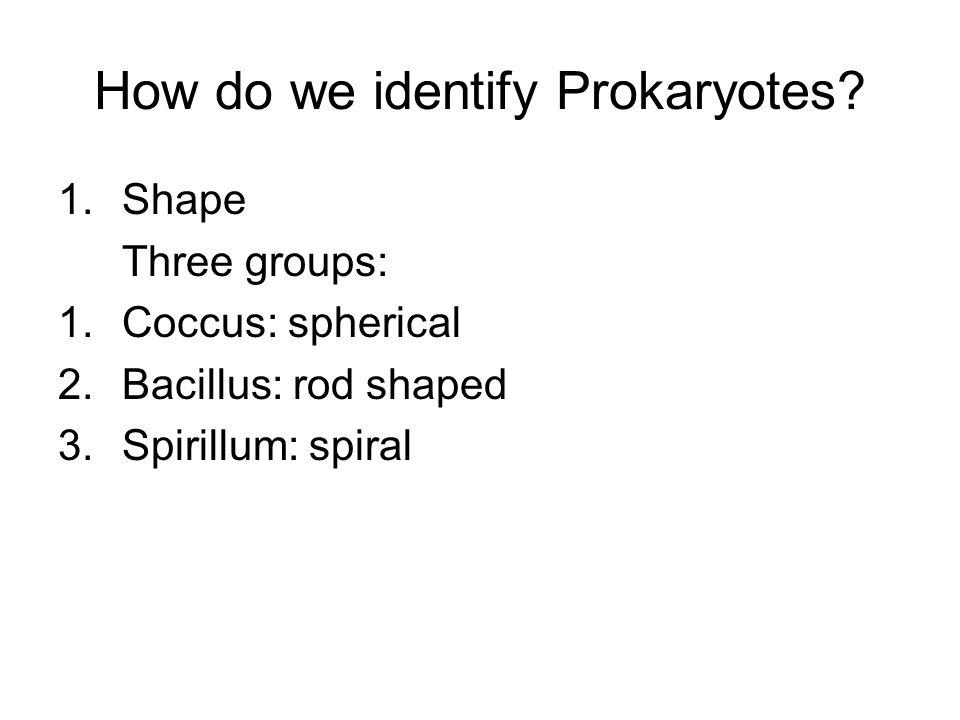 How do we identify Prokaryotes.