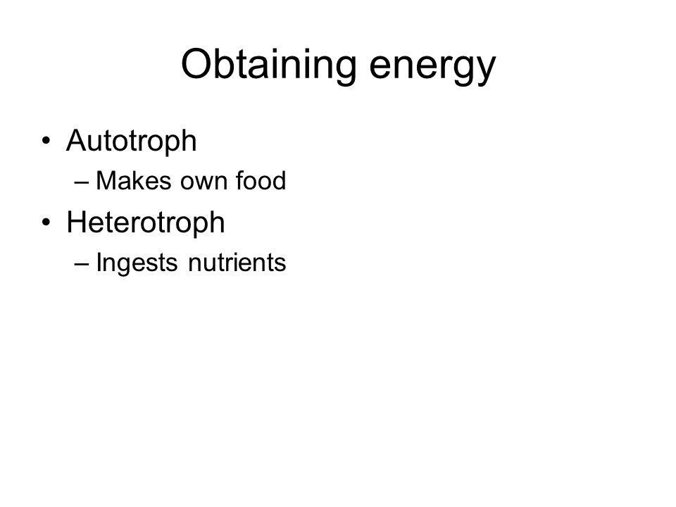 Obtaining energy Autotroph –Makes own food Heterotroph –Ingests nutrients