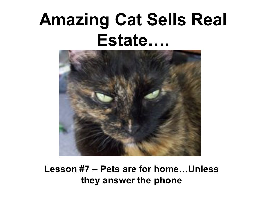 Amazing Cat Sells Real Estate…. Lesson #7 – Pets are for home…Unless they answer the phone