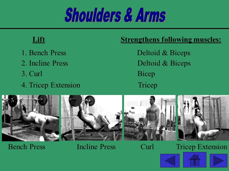 v LiftStrengthens following muscles: Bench PressPectorals Incline Press Dumb bell Flies Bench PressIncline Press Dumb bell Flies