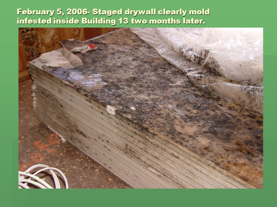 February 5, 2006- Staged drywall clearly mold infested inside Building 13 two months later.