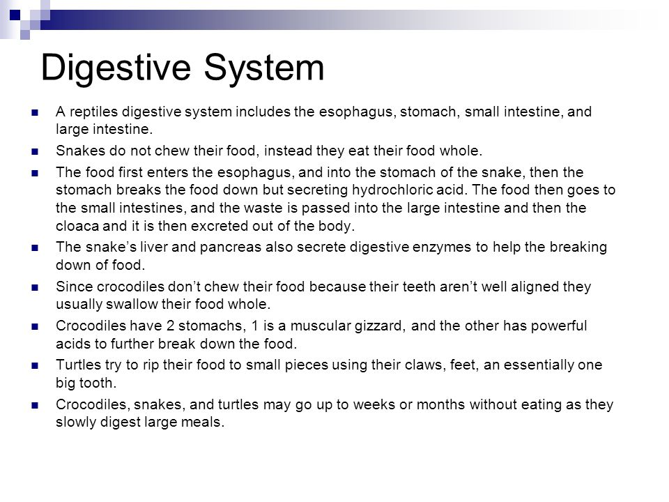 Reptile digestive system