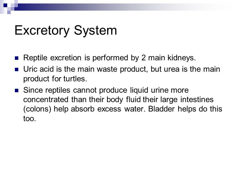 Excretory System Reptile Reptile Excretory System
