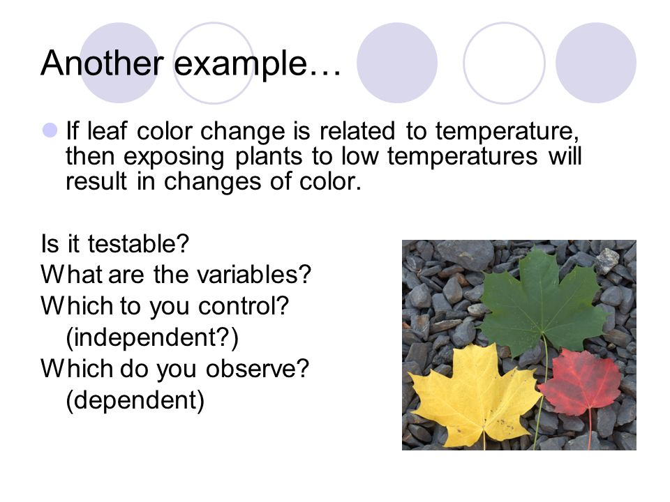 Another example… If leaf color change is related to temperature, then exposing plants to low temperatures will result in changes of color. Is it testa