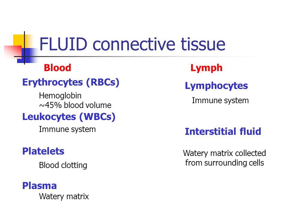 FLUID connective tissue Blood Lymph Erythrocytes (RBCs) Leukocytes (WBCs) Platelets Plasma Hemoglobin ~45% blood volume Immune system Blood clotting W