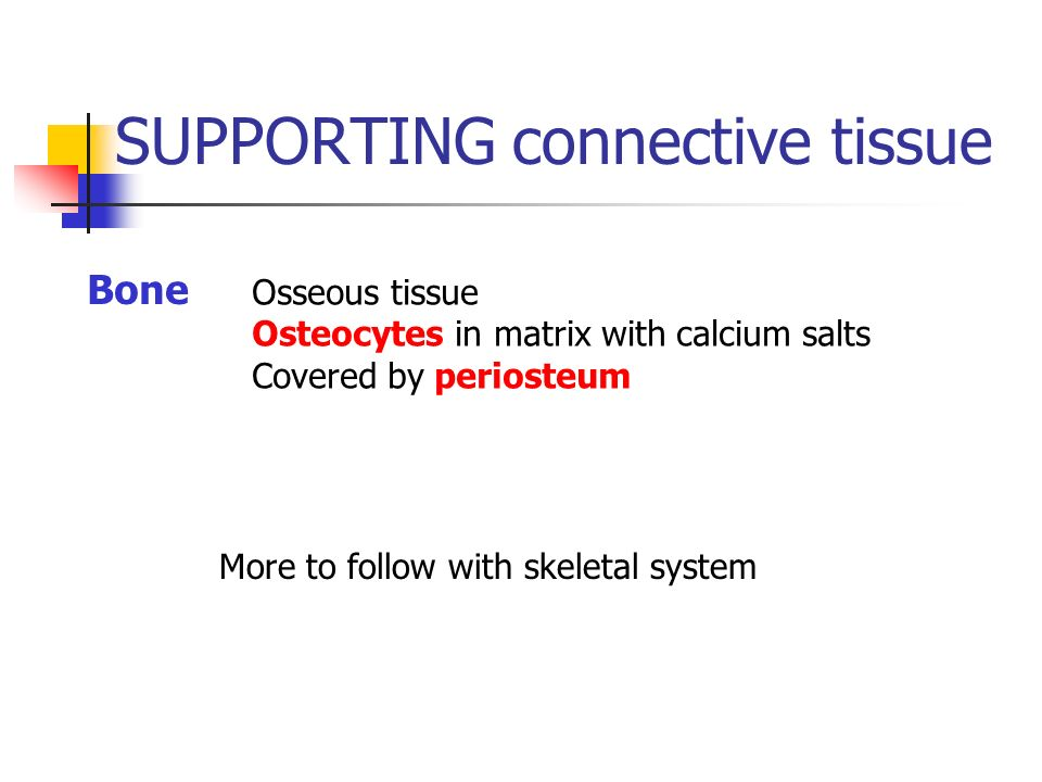 SUPPORTING connective tissue Bone Osseous tissue Osteocytes in matrix with calcium salts Covered by periosteum More to follow with skeletal system