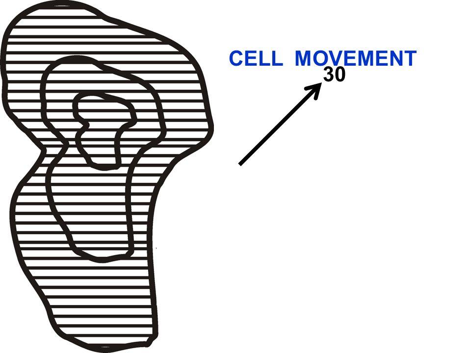 30 Area/Line Movement CELL MOVEMENT