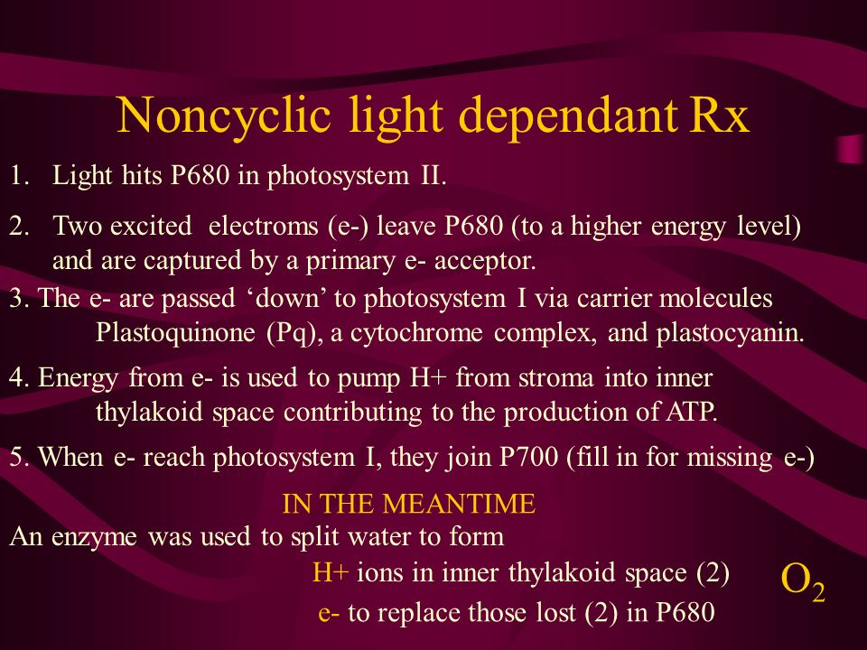 Noncyclic light dependant Rx 1.Light hits P680 in photosystem II. 2.Two excited electroms (e-) leave P680 (to a higher energy level) and are captured