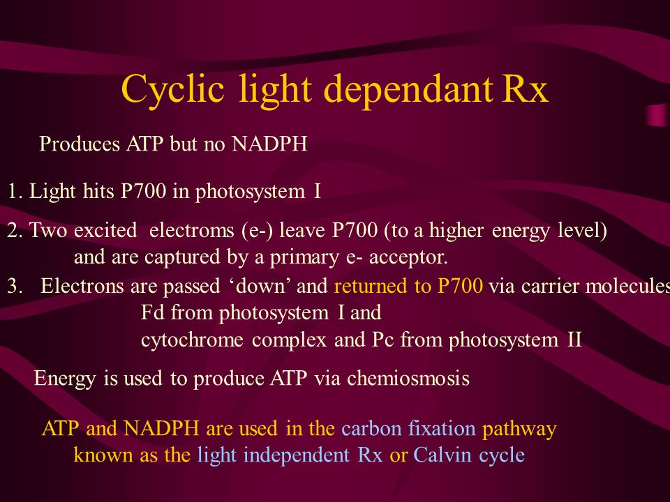 Cyclic light dependant Rx Produces ATP but no NADPH 1. Light hits P700 in photosystem I 2. Two excited electroms (e-) leave P700 (to a higher energy l