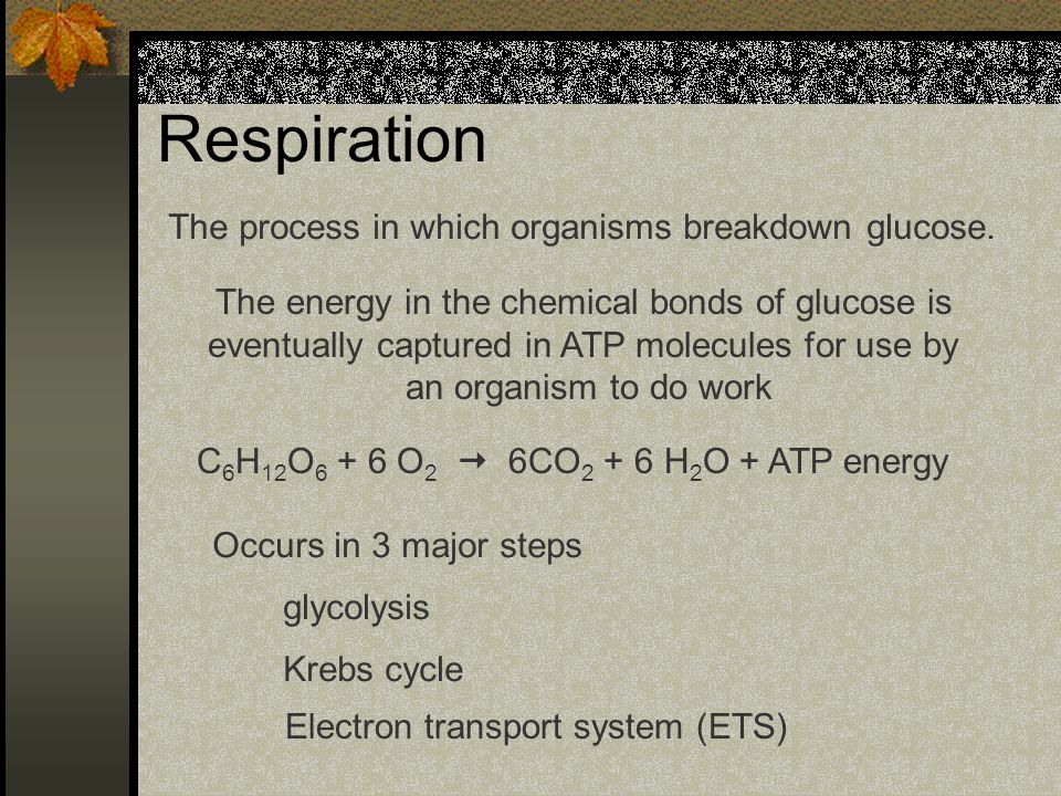 Respiration The process in which organisms breakdown glucose. The energy in the chemical bonds of glucose is eventually captured in ATP molecules for