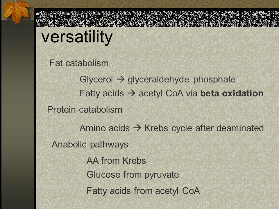 versatility Fat catabolism Glycerol glyceraldehyde phosphate Fatty acids acetyl CoA via beta oxidation Amino acids Krebs cycle after deaminated Protei