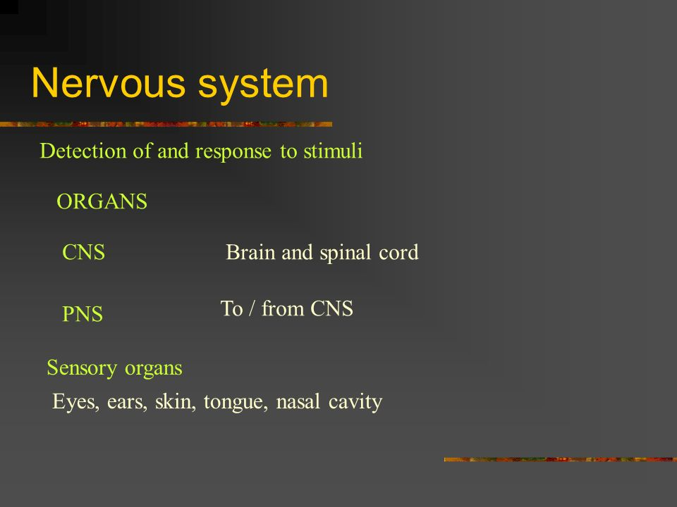 Nervous system Detection of and response to stimuli ORGANS CNSBrain and spinal cord PNS To / from CNS Sensory organs Eyes, ears, skin, tongue, nasal c