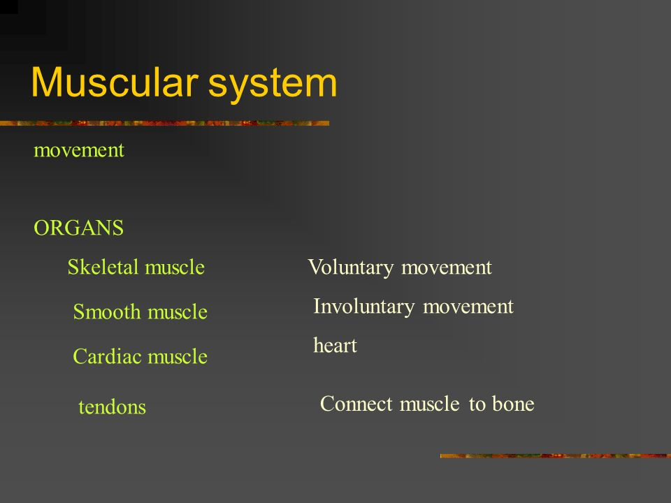 Muscular system movement ORGANS Skeletal muscleVoluntary movement Smooth muscle Involuntary movement Cardiac muscle heart tendons Connect muscle to bo
