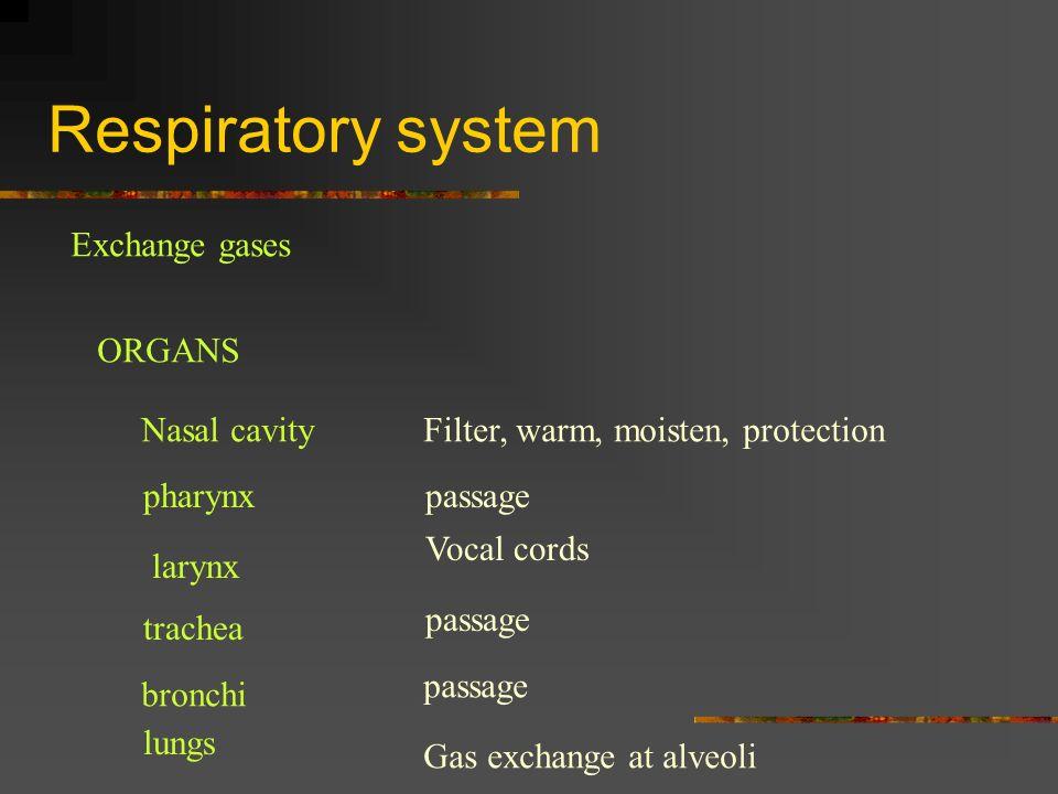 Respiratory system Exchange gases ORGANS Nasal cavityFilter, warm, moisten, protection pharynxpassage larynx Vocal cords trachea passage bronchi passa