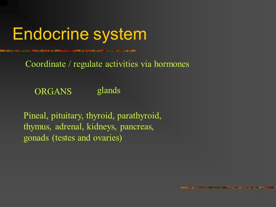 Endocrine system Coordinate / regulate activities via hormones ORGANS glands Pineal, pituitary, thyroid, parathyroid, thymus, adrenal, kidneys, pancre