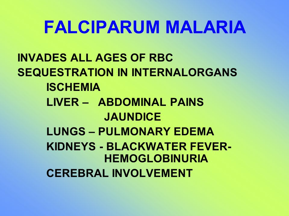 FALCIPARUM MALARIA INVADES ALL AGES OF RBC SEQUESTRATION IN INTERNALORGANS ISCHEMIA LIVER – ABDOMINAL PAINS JAUNDICE LUNGS – PULMONARY EDEMA KIDNEYS -