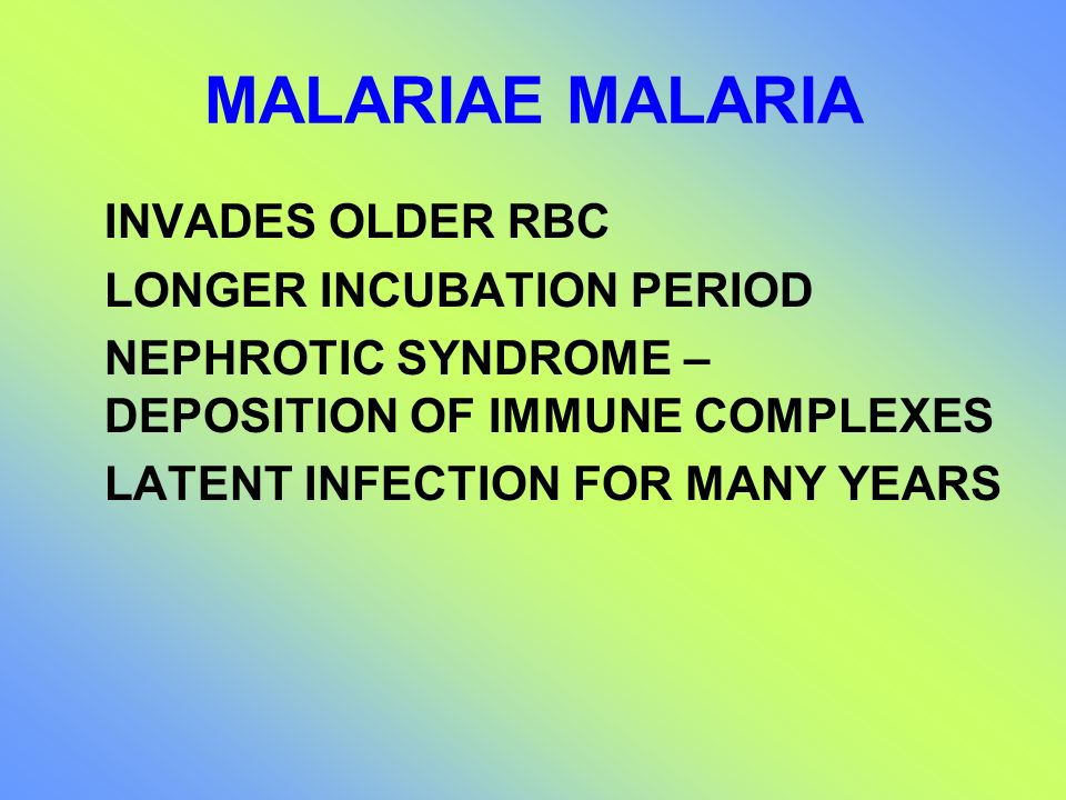 MALARIAE MALARIA INVADES OLDER RBC LONGER INCUBATION PERIOD NEPHROTIC SYNDROME – DEPOSITION OF IMMUNE COMPLEXES LATENT INFECTION FOR MANY YEARS