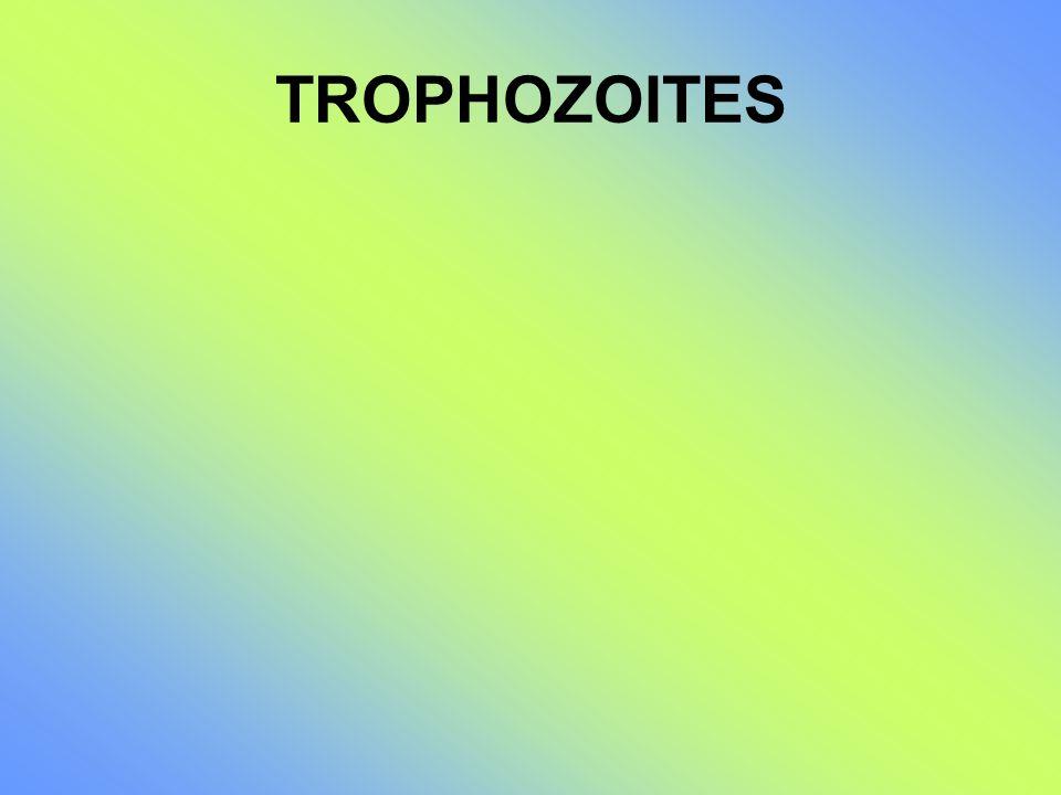 TROPHOZOITES