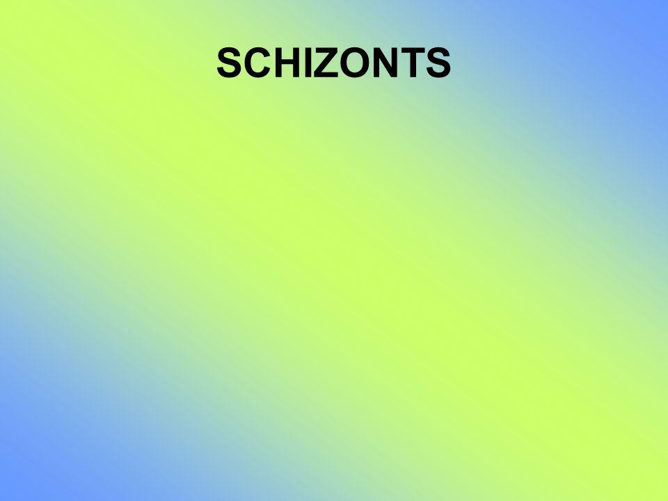 SCHIZONTS