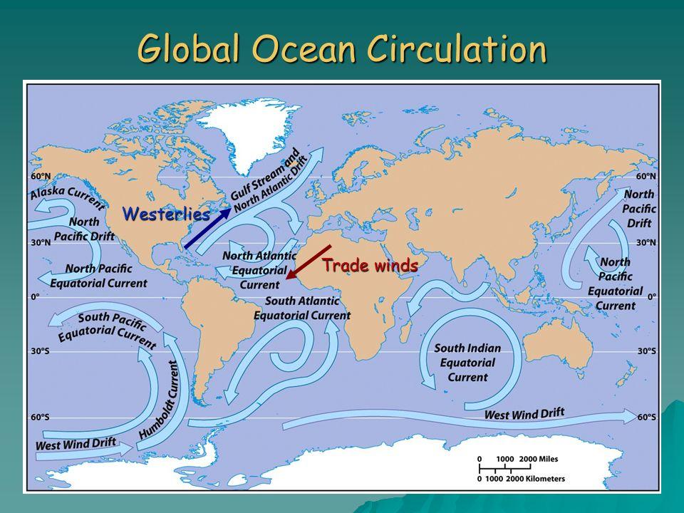 Global Ocean Circulation Trade winds Westerlies