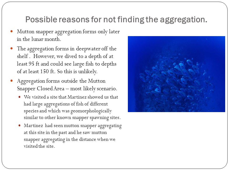 Possible reasons for not finding the aggregation. Mutton snapper aggregation forms only later in the lunar month. The aggregation forms in deepwater o
