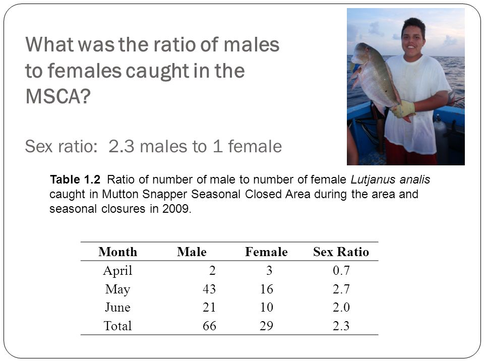What was the ratio of males to females caught in the MSCA? Sex ratio: 2.3 males to 1 female MonthMaleFemaleSex Ratio April 2 30.7 May 43 162.7 June 21
