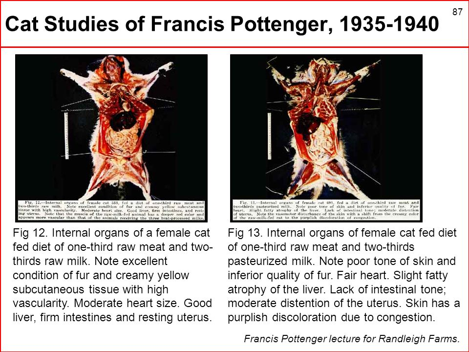 87 Cat Studies of Francis Pottenger, 1935-1940 Francis Pottenger lecture for Randleigh Farms. Fig 12. Internal organs of a female cat fed diet of one-