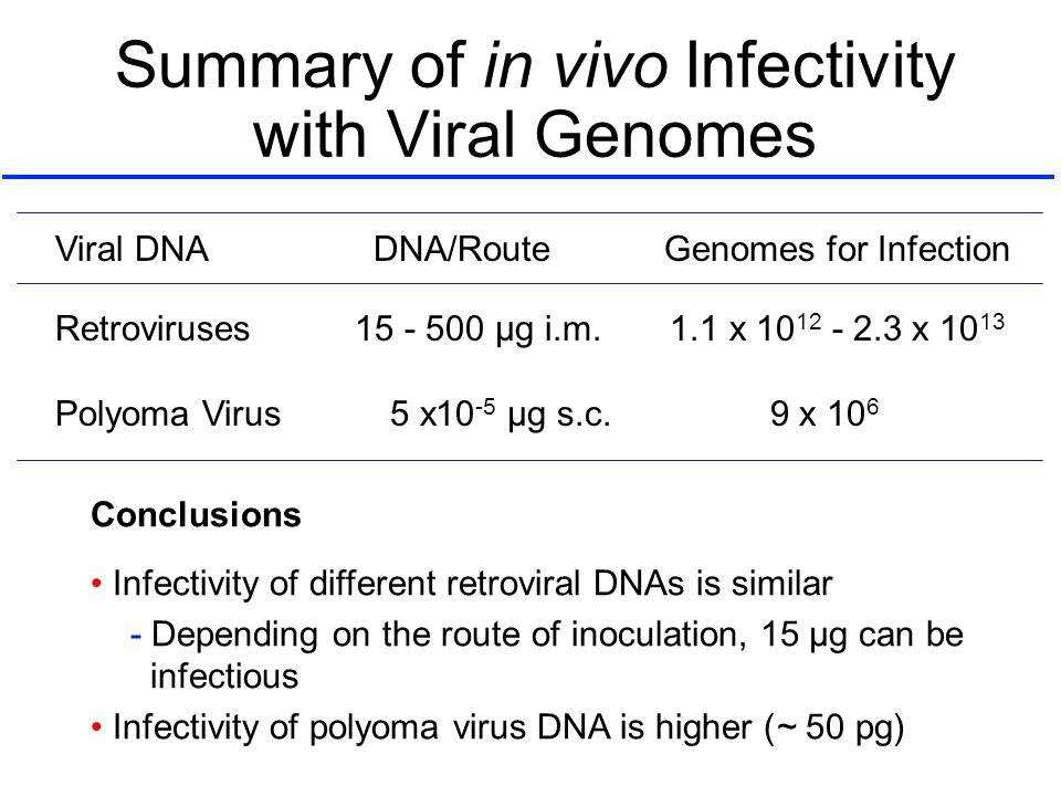 Summary of in vivo Infectivity with Viral Genomes Retroviruses 15 - 500 µg i.m. 1.1 x 10 12 - 2.3 x 10 13 Polyoma Virus 5 x10 -5 µg s.c. 9 x 10 6 Vira
