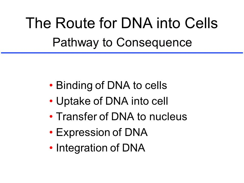 The Route for DNA into Cells Binding of DNA to cells Uptake of DNA into cell Transfer of DNA to nucleus Expression of DNA Integration of DNA Pathway t