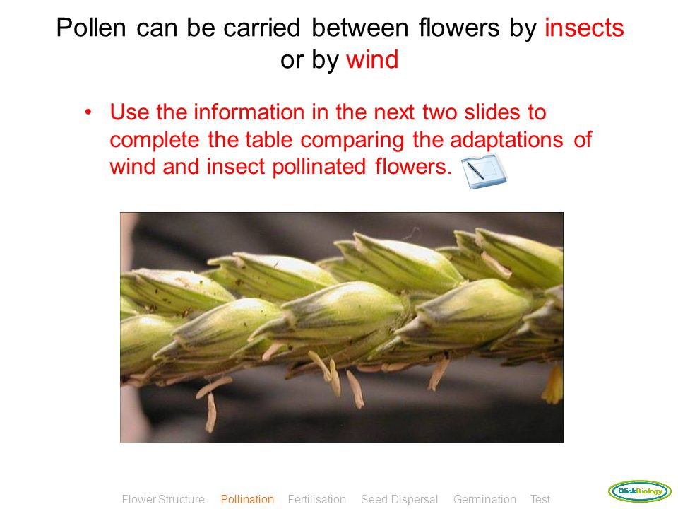 Pollination is the transfer of pollen from the anther to the stigma This is an example of cross-pollination as the pollen travels from one flower to a